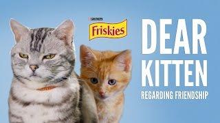 Download Dear Kitten: Regarding Friendship Video
