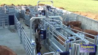 Download PASDELOU - Centre d'expérimentation et de formation de contention fixe pour bovins Video