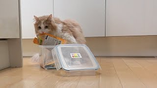 Download 집을 비웠을 때 서열 1위 고양이가 하는 일 Video