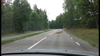 Download Turbo Dashcam #18 - Morons on bicycles and more in Stockholm Video