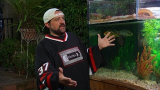Download Kevin Smith Loves His Custom Aquarium Stocked With Turtles and Koi! Video