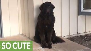 Download Sensitive dog shames owner but quickly forgives Video