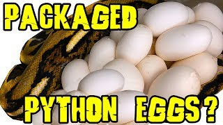Download Giant Python package Surprise Second Half ! Video