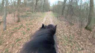 Download Pferd ( Friese ) rennt im Galopp durch Wald mit GOPRO Video