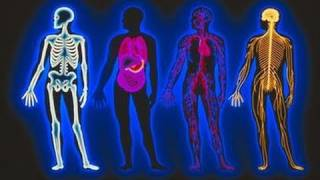 Download Teaching Anatomy & Physiology in Massage Schools Video