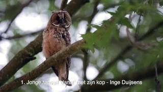 Download Vroege Vogels - Mooiste natuurfilmpjes 2016 Video