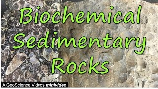Download Biochemical Sedimentary Rocks Video