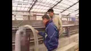 Download Completely farm raised bluefin tuna Video
