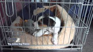 Download Crate training your puppy Video