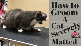 Download Grooming an extremely matted cat Video
