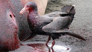 Download 11 Most DANGEROUS Birds Video