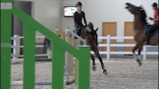 Download Dressage Horse Jumping - Quattro Video
