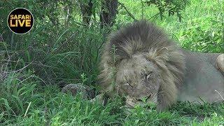 Download safariLIVES: Episode 31 Video
