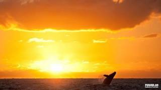 Download Whales Alive ~ Leonard Nimoy ~ Whales Weep Not! Video