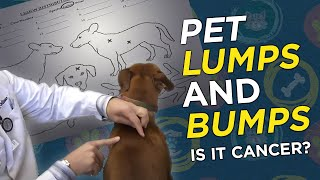 Download Is it Cancer? Pet Lumps & Bumps - VetVid Episode 023 Video