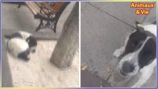 Download Après 3 ans dans la rue, ce chien retrouve son maître et les retrouvailles sont très émouvantes Video