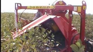 Download JOANNA-3 półrzędowy kombajn do owoców jagodowych (half row berry harvester) Video