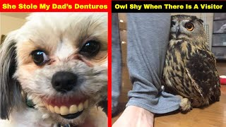 Download Hilarious Photos That Prove Once You Get A Pet You Will Never Be Sad Again Video