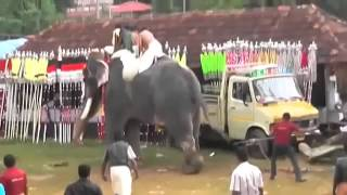 Download Killer elephant goes berserk, trampling Indians at Kerala festival Video