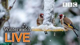 Download Cute wildlife cams UK 28 Jan 🦊❄️🐿 - BBC Winterwatch Video