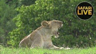 Download safariLIVE - Sunset Safari - December 23, 2018 Video