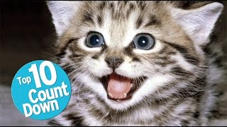 Download Top 10 Domesticated Cat Breeds Video