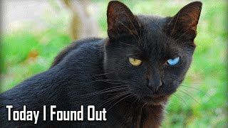 Download Why Black Cats Are Considered Bad Luck Video