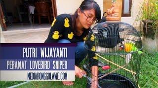 Download DUNIA HOBI : Mandi Pagi Bareng Lovebird Sniper Bersama Putri Wijayanti Video