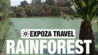 Download Rainforest (Madagascar) Vacation Travel Video Guide Video