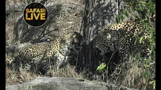 Download safariLIVE - Sunrise Safari - October 21, 2018 Video