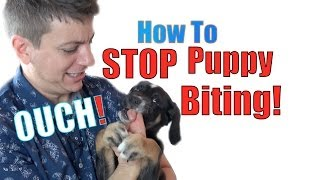 Download How to Train a Puppy NOT to BITE Video