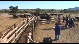 Download Animal Health and Production - Zimbabwe Video
