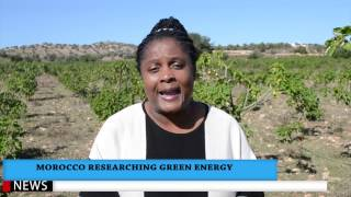 Download Morocco Researching Green Energy Jatropha Plant COP22 Video