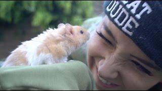 Download We Got A Hamster Video