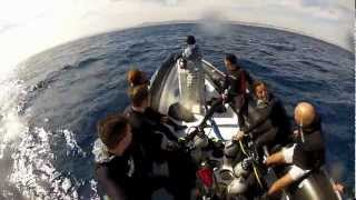 Download Diving with Sharks @ Elphistone Reef, Marsa Alam, Video