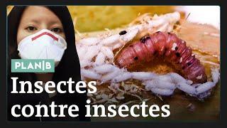 Download Comment des insectes peuvent sauver des millions d'humains #PlanB Video