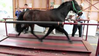 Download Horse on a treadmill Video