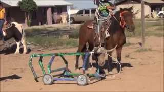 Download TEAM ROPING on ponies , ponies for sale Video