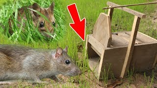 Download (New) Amazing Quick Mouse Box Trap Using Tree, Best Trap, Easy Make, Easy To Use, How To Create It 1 Video