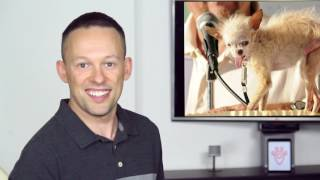 Download The Sassy Scoop: Ugly Dogs (Top 10 List) Video