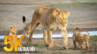 Download 5K African Wildlife - Virtual Trip to Kgalagadi Transfrontier Park, South Africa - 1 Hour Video Video