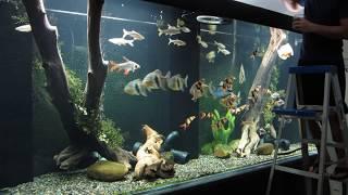 Download Huge Aquarium- Feeding Time Video
