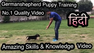 Download Germanshepherd Puppy Attack Training, Socialisation and Total Care Video