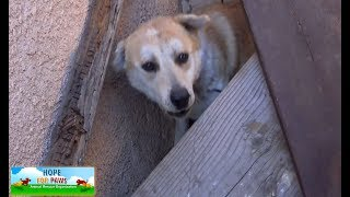 Download Street-smart homeless dog manages to avoid rescuing time after time. Video