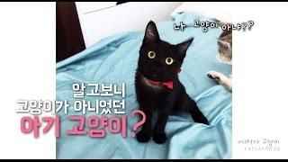 Download 고양인줄 알고 키웠는데 알고보니 catcatcat😂 Video
