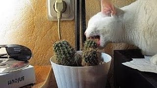 Download The funniest unexpected CAT MOMENTS on earth ! Video