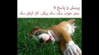 Download محل خواب سگ, سگ بیگل, گاز گرفتن سگ Video