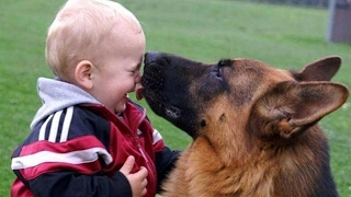 Download Baby Playing with German Shepherd Dog | There's nothing greater than Dog and Baby Video