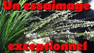 Download Un essaimage exceptionnel (Bonus FAQ #3) Video