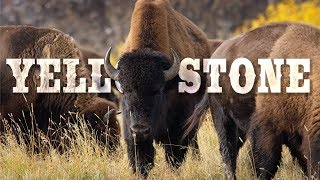Download Yellowstone National Park in 8K 60P (FUHD) Video